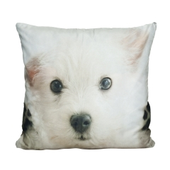 Pillow puppy